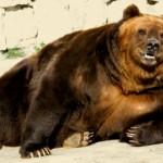 Arkadiusz Rzepiński: Jestem niedźwiedziem