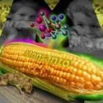 Zabójczy preparat Monsanto?