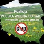 """Stanowisko koalicji """"Polska wolna od GMO"""" w sprawie projektu ustawy o nasiennictwie"""
