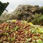 Pół miliona ton żywności na śmietnik