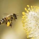 Zyski globalnych koncernów masowo zabijają pszczoły